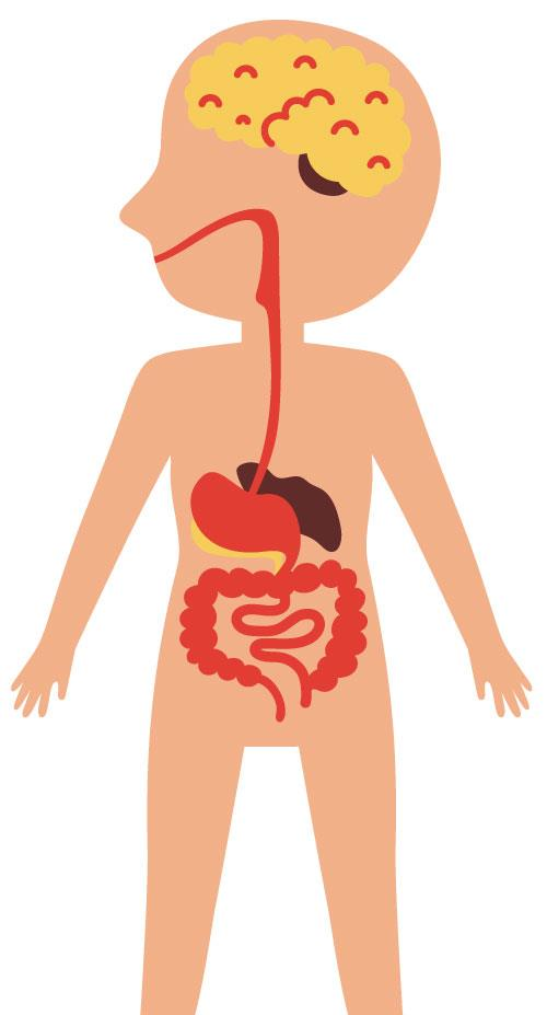 How do the digestive system and the brain affect each other?