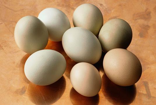 계란 구입 방법
