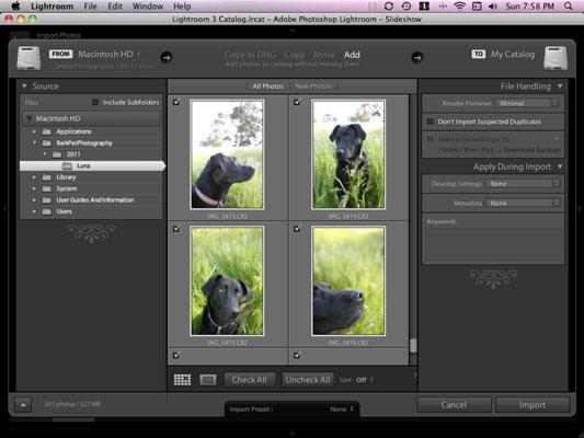 강아지 사진을 Lightroom으로 가져오는 방법